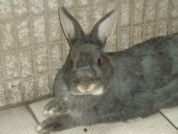 我家的兔子