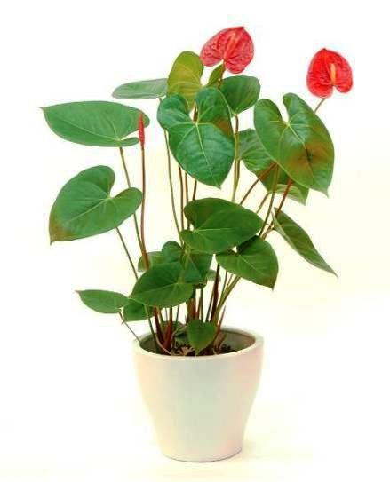 有没有适合在室内养的植物?