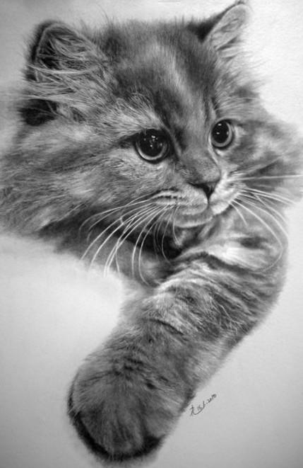 铅笔画猫, 婚礼情报│wed168